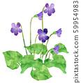 紫羅蘭 59954983
