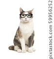 Cat sitting wearing black glasses 59956252