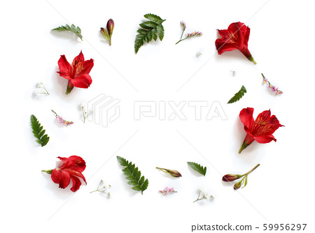 Flowers and leaves on a white background 59956297