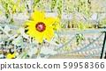 꽃 59958366