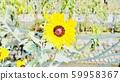 꽃 59958367