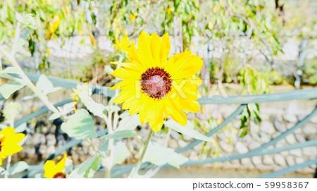 flower 59958367