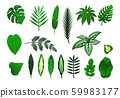 Icon set of tropical plants leaves. Vector 59983177