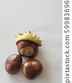 three close up fresh horse chestnut on white 59983696