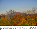 autumn colorful red orange forest and trees and 59984554