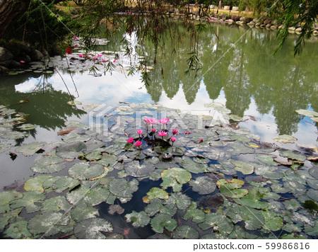 新竹縣寶山北埔峨嵋湖 59986816
