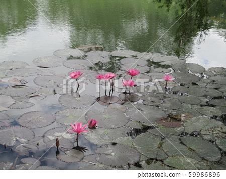 新竹縣寶山北埔峨嵋湖 59986896