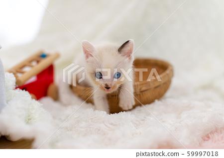 새끼 고양이 생후 4 주간 보호 고양이 59997018