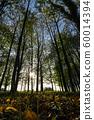 Poplar undergrowth 60014394
