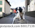 An abandoned dog standing on a wall in a city 60017136