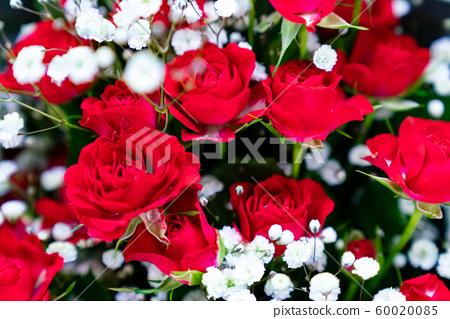 다양한 종류의 꽃 60020085