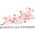 櫻花水彩插圖 60038689