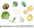 西方蔬菜水彩 60038995