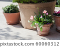Spring gardening on town streets. Pink tulips and green plants in flower pots outdoor 60060312