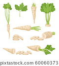 Parsnips Roots and Leaves Vector Set. Agricultural Food Collection 60060373