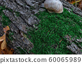 Snail on a tree trunk or log covered by green 60065989