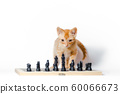 cute little red kitten and chess isolated on white background 60066673