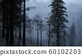 Misty fog in pine forest on mountain slopes 60102203