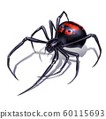 Black widow spider on white background realistic illustration isolate. Black widow spider killer is the most dangerous and poisonous spider. 60115693