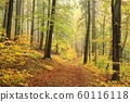 Forest trail in the misty autumn weather 60116118