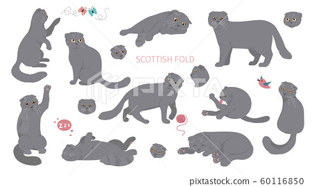 Cartoon cat characters collection. Scottish fold`s 60116850
