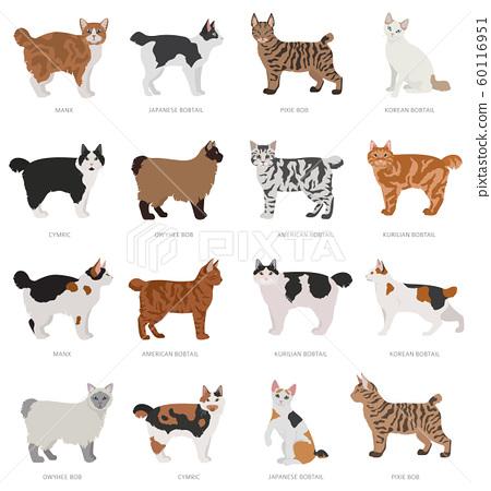 Short Tail Type Bob Cats Domestic Cat Breeds And Stock Illustration 60116951 Pixta