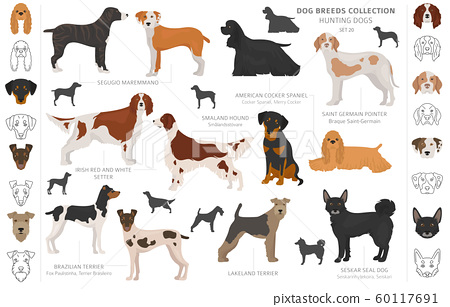 Hunting dogs collection isolated on white clipart. 60117691