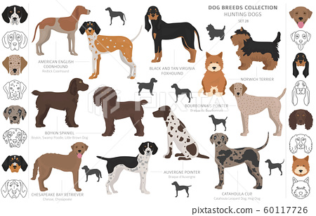 Hunting dogs collection isolated on white clipart. 60117726