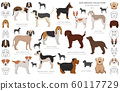 Hunting dogs collection isolated on white clipart. 60117729