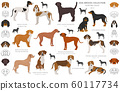 Hunting dogs collection isolated on white clipart. 60117734