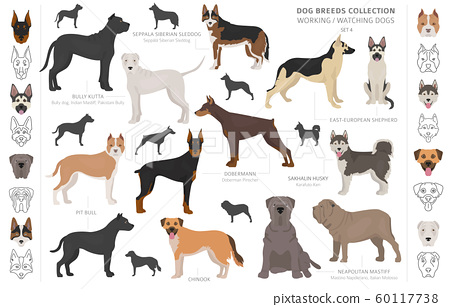 Working, service and watching dogs collection 60117738