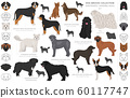 Shepherd and herding dogs collection isolated on 60117747