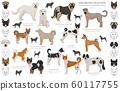 Shepherd and herding dogs collection isolated on 60117755