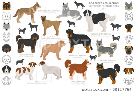 Shepherd and herding dogs collection isolated on 60117764