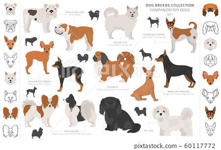 Companion and miniature toy dogs collection 60117772