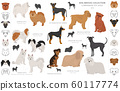 Companion and miniature toy dogs collection 60117774