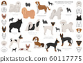 Companion and miniature toy dogs collection 60117775
