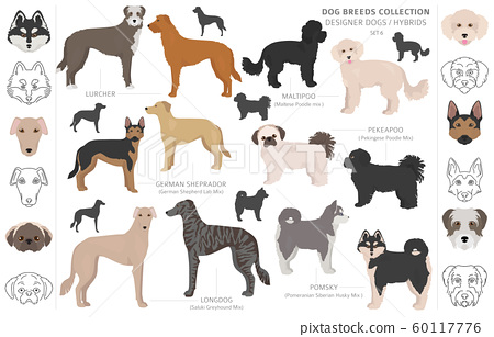 Designer dogs, crossbreed, hybrid mix pooches 60117776