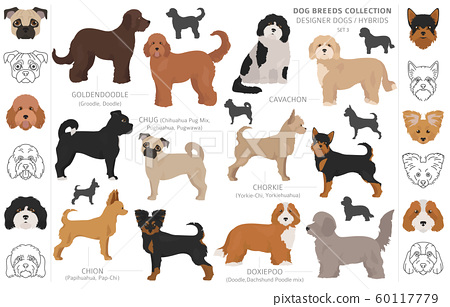 Designer dogs, crossbreed, hybrid mix pooches 60117779