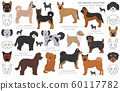 Designer dogs, crossbreed, hybrid mix pooches 60117782