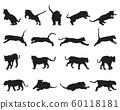 tiger, silhouette, animal 60118181