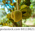 Green leaves in Asian tropical rainforest, Thailand 60119621