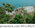 Green leaves in Asian tropical rainforest, Thailand 60119625