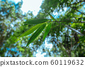 Green leaves in Asian tropical rainforest, Thailand 60119632