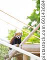 小熊猫 60143684