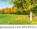 Autumn tree with fallen leaves 60144311