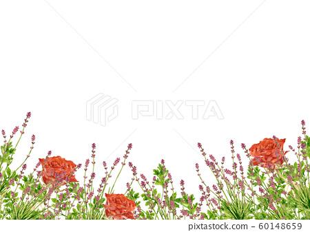 玫瑰和薰衣草水彩 60148659