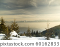 Snow covered fir trees against blue sky on cold 60162833
