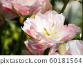 spring flowers, close-up of plants on a sunny day 60181564