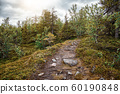 Trail in the mixed forest. Summer landscape. North 60190848